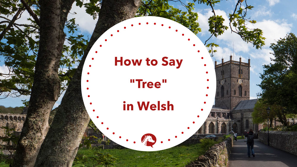 word for tree in welsh